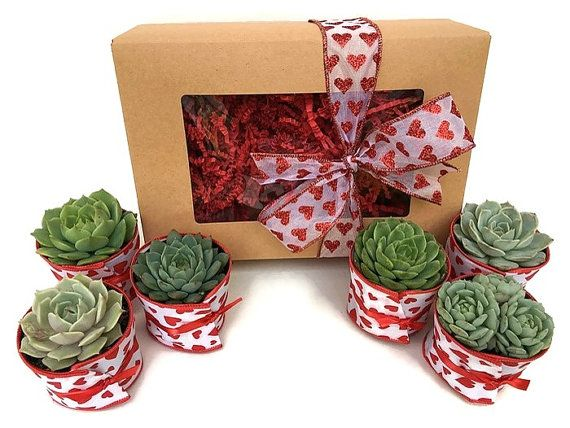 Mothers Day Succulent Gift Box Garden In A Box 6 Succulents