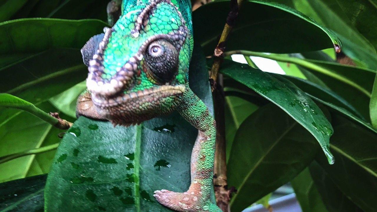 Green Planet City Walk Rainforest Chameleons Rainforest Dubai With Images Rainforest Rainforest Birds Dubai