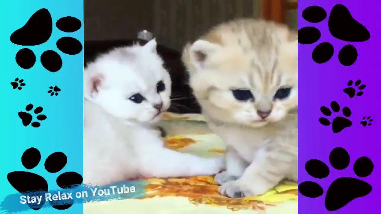 Cats Meowing Cute Kittens Meowing 2020 Cat Meowing Video Kitten Me In 2020 Kittens Cutest Cute Kitten Gif Kitten Meowing