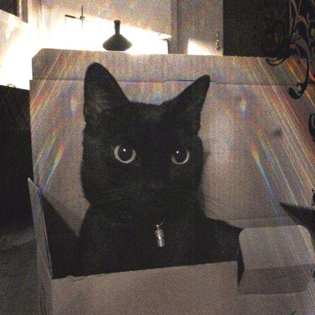 Tesla! Loves boxes