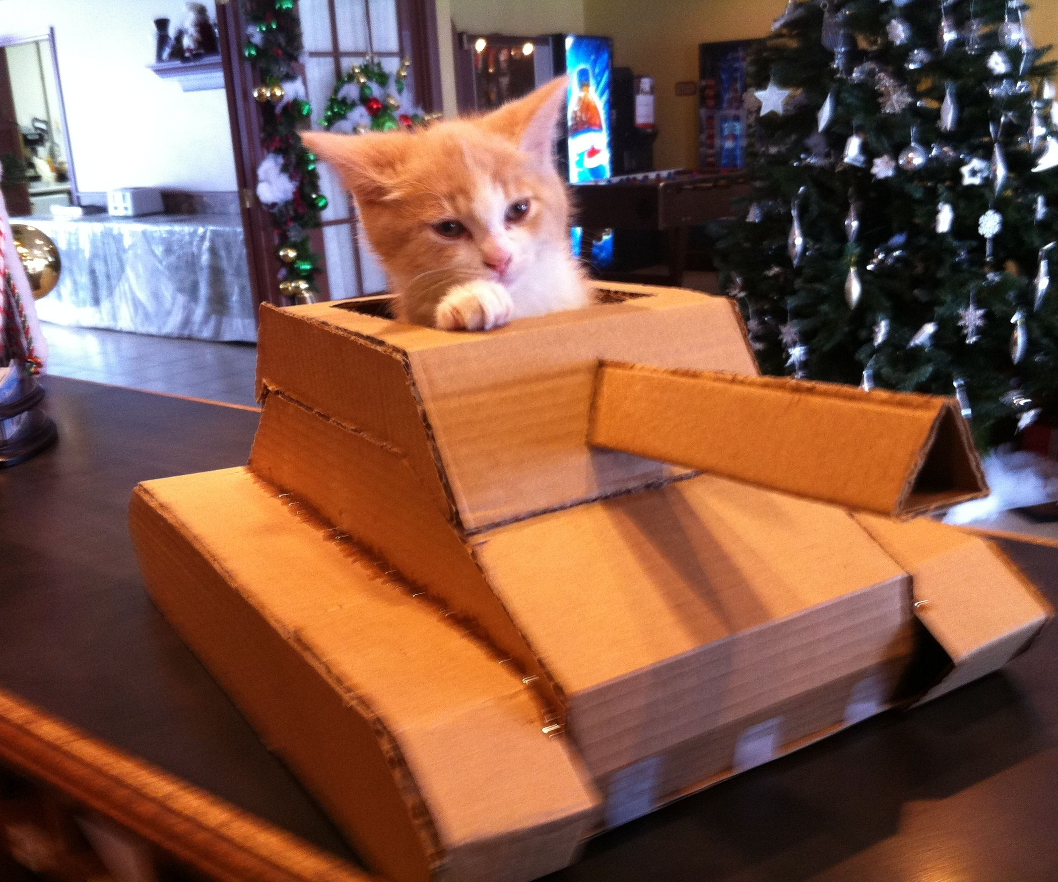 I Am Going To Show You The Steps Of How I Made My Own Tank Out Of A Cardboard Box I Made It For My Little Kitten Cardboard Cat House