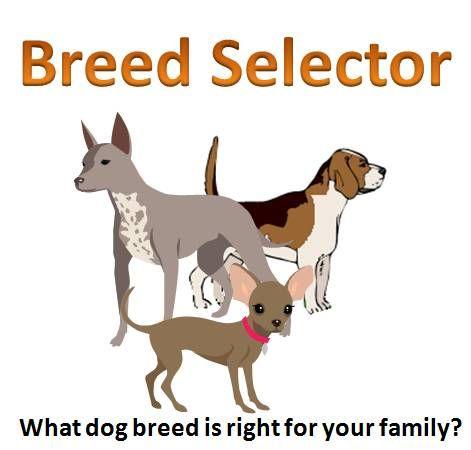 Dog Breed Selector Quiz Via Schnauzers Rule