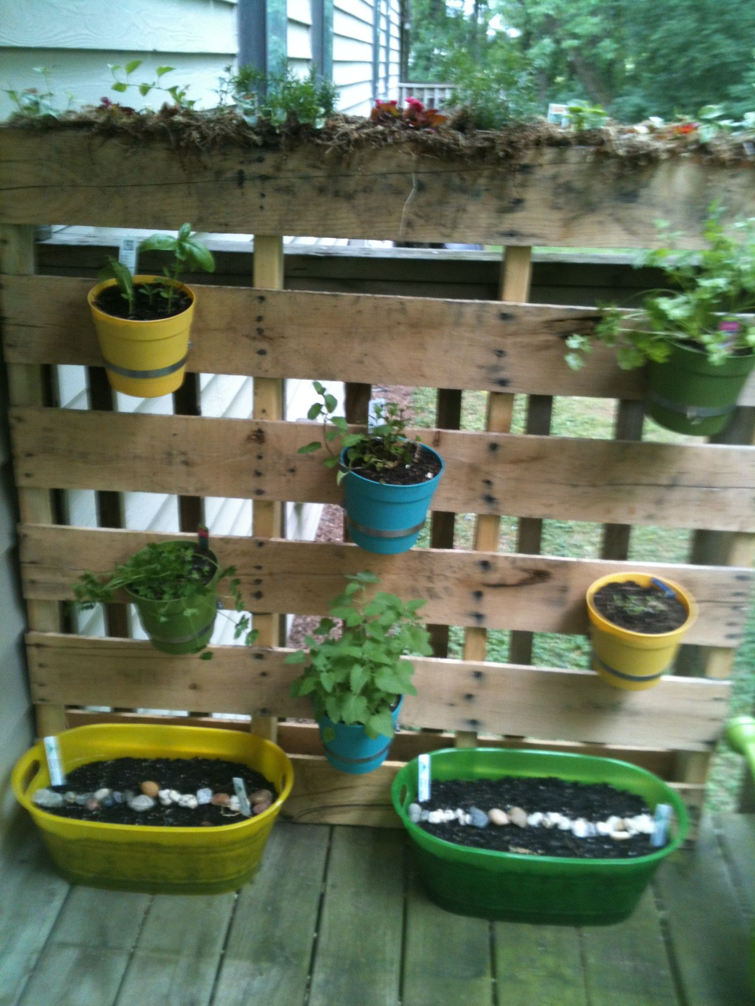 My completed version of a project I pinned...pallet herb garden. I planted the top of the pallet with annual flowers and trailing accent plants. In the tubs, I have peas. Pretty happy with the results.