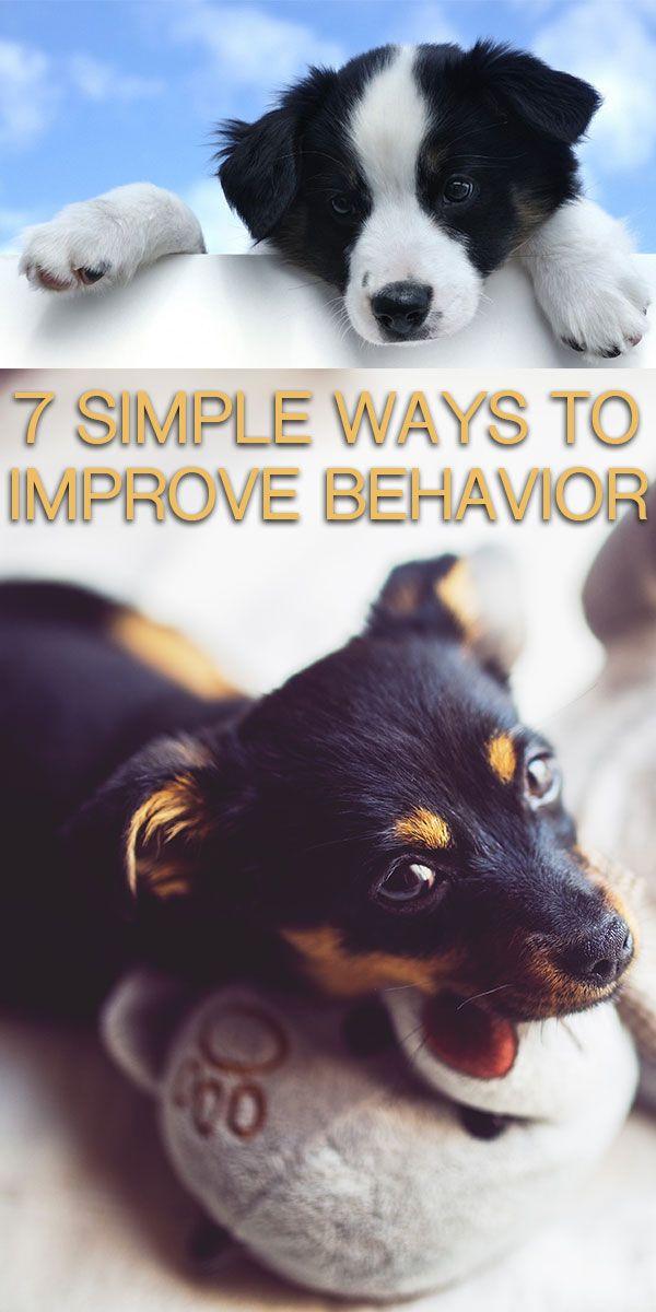 7 Ways To Improve Your Dog S Behavior In A Week Archer Love