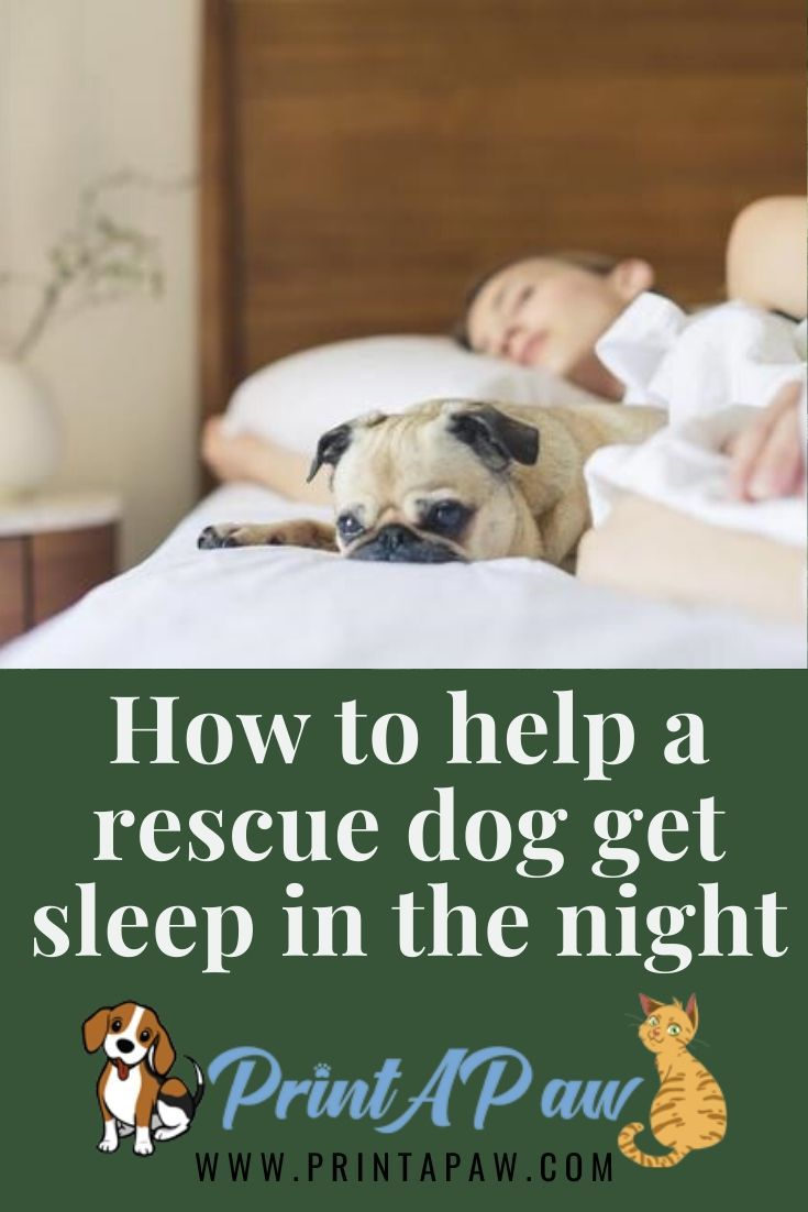 How To Help A Rescue Dog That Has Difficulty Sleeping During The