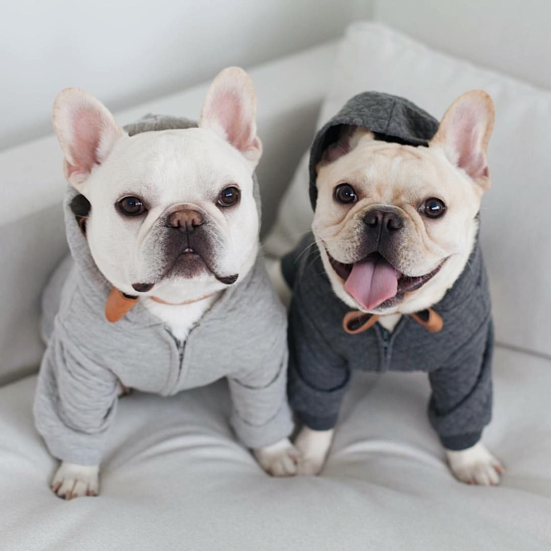 Cato Happy Monday Theo No Such Thing Hoodies Collars By