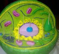 Haremos una maqueta de una célula vegetal con poliexpan, pinturas, plastilina.