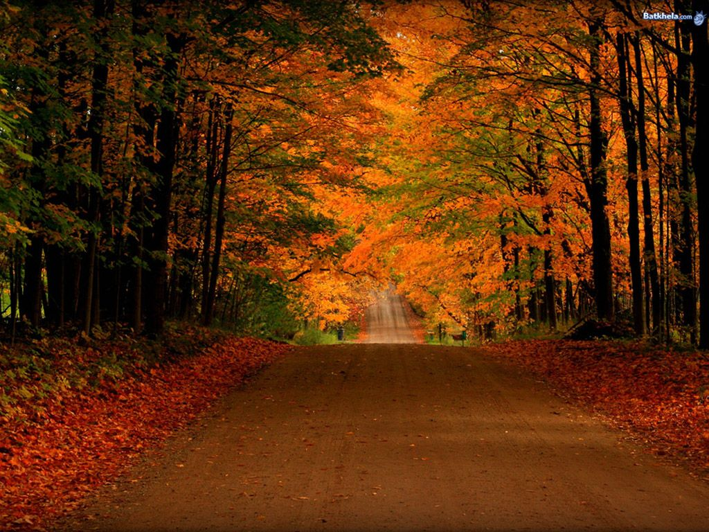 free fall screensavers and wallpaper free orange autumn road