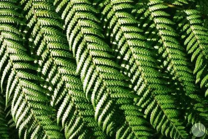 More fern leaves.