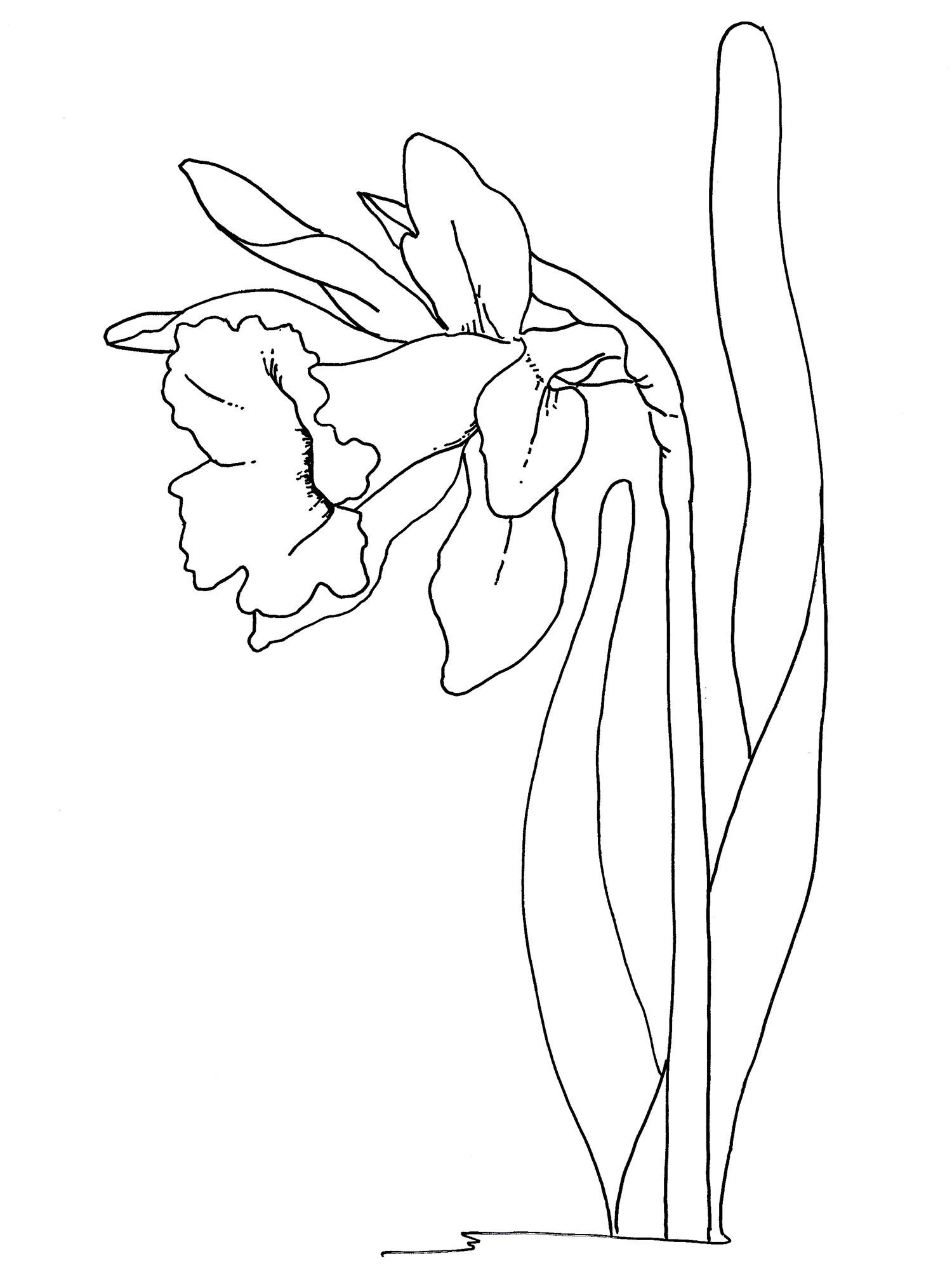 Easter Flowers Coloring Pages – Daffodil - Coloring Pages by The ...