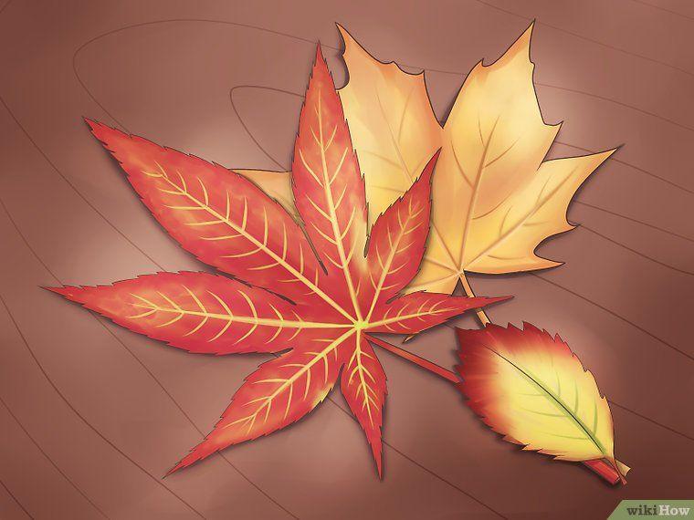 6 formas de conservar las hojas de otoño - wikiHow