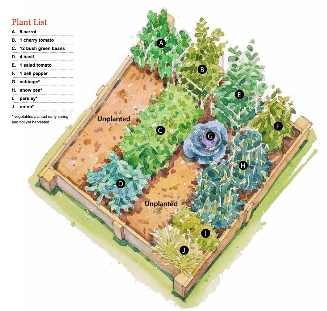 Summer Bounty Garden Plan
