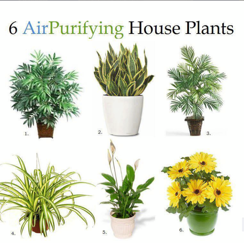 These plants are especially good at being air filters for Air filtering plants