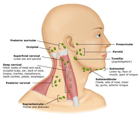 occipital lymphknoten