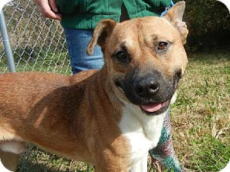 Harvey Urgent Calhoun County Humane Society Inc In Anniston