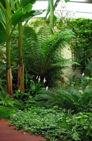 Jardin Exotique Paysagiste Taffin With Images Small Tropical