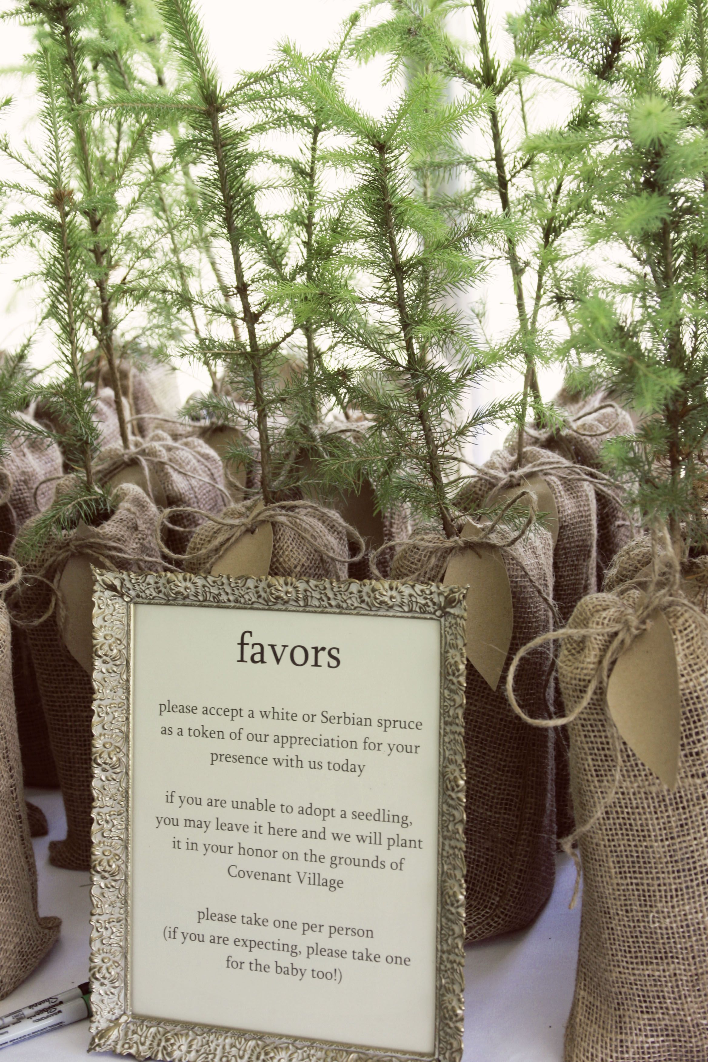 plant-a-tree wedding party favors mmmm order from the forest ...