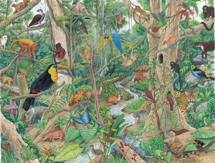 Selva Húmeda Tropical Logopedia Selva Humeda Selva Amazonica Y