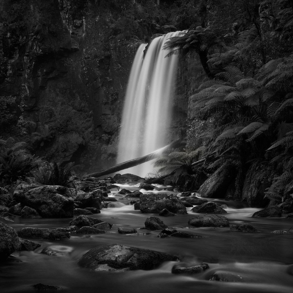 Otway National Park. A mono version of one of my favourite images this year.