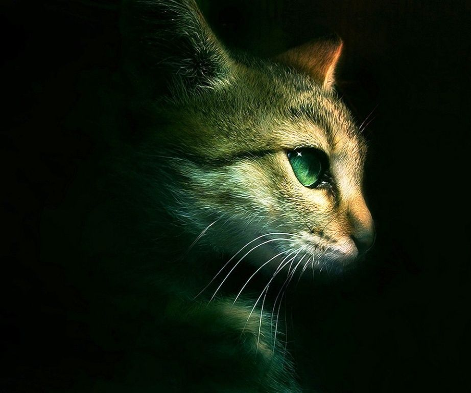 25 Hd Wallpapers For Android Phone You Must Have Warrior Cats