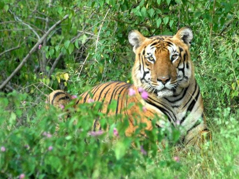 Sanctuariesindia: Here you can get information about all ...