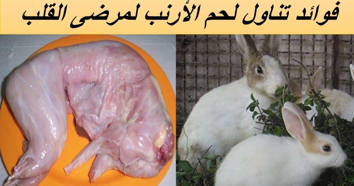 اهم فوائد اكل لحم الارنب فوائد لحم الارانب للحامل فوائد لحم الارانب للتنحيف والدايت Rabbit Meat Rabbit Meat