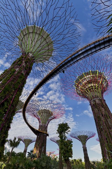 The Supertrees At Garden By The Bay Singapore By Gardens By The Bay Wonderful Places Beautiful World