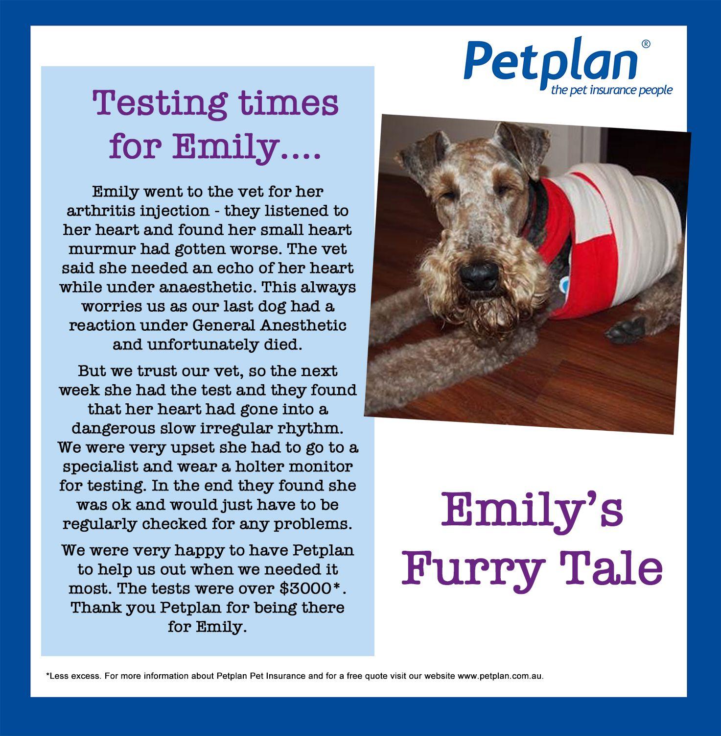 Protect Your Pet With Petplan Pet Insurance Visit Petplan Com Au