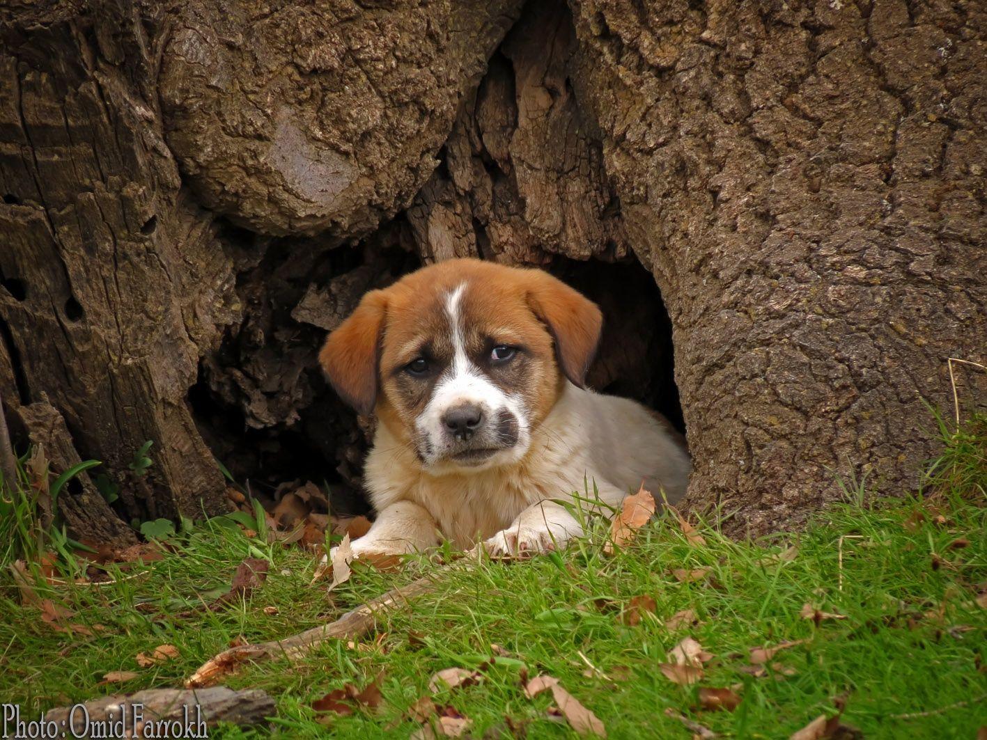 Sad Puppy by Omid Farrokh on 500px