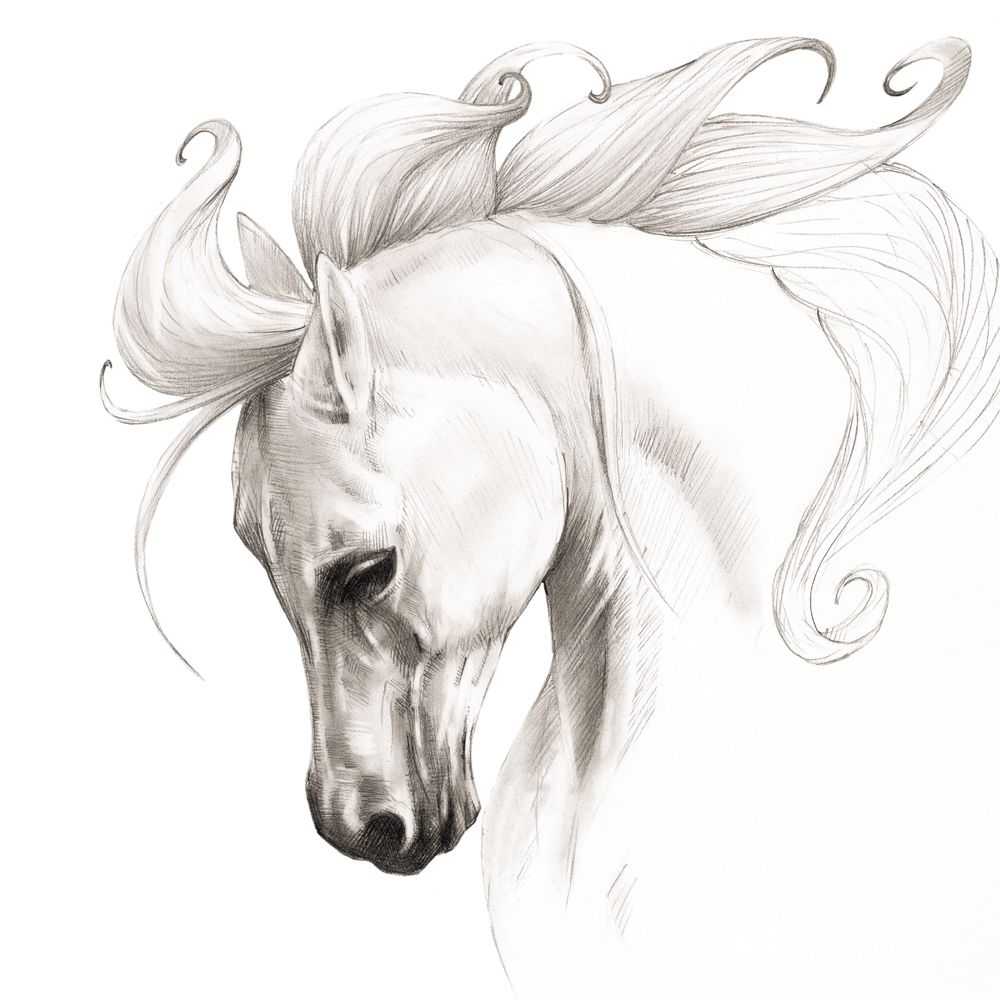 Beautiful white horse print black and white horse decor