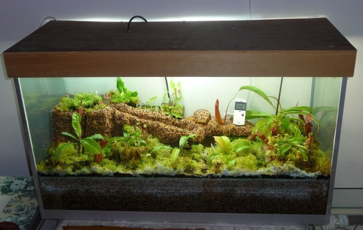 terrarium of carnivorous plants aquarium terraria. Black Bedroom Furniture Sets. Home Design Ideas