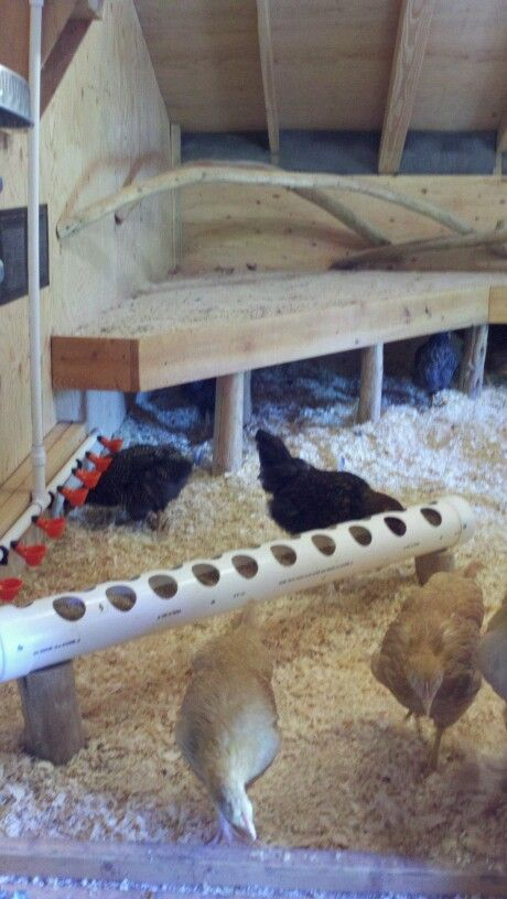Our Chicken Coop With Diy Automatic Feeder Amp Waterer Poop Boards For Easy Clean Up Fan And