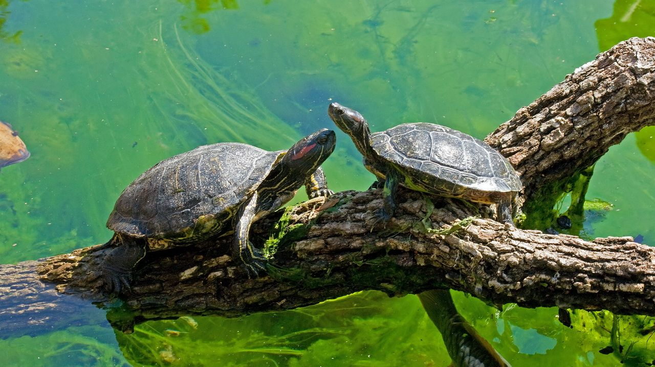 Turtle Talk by Mike Oberg