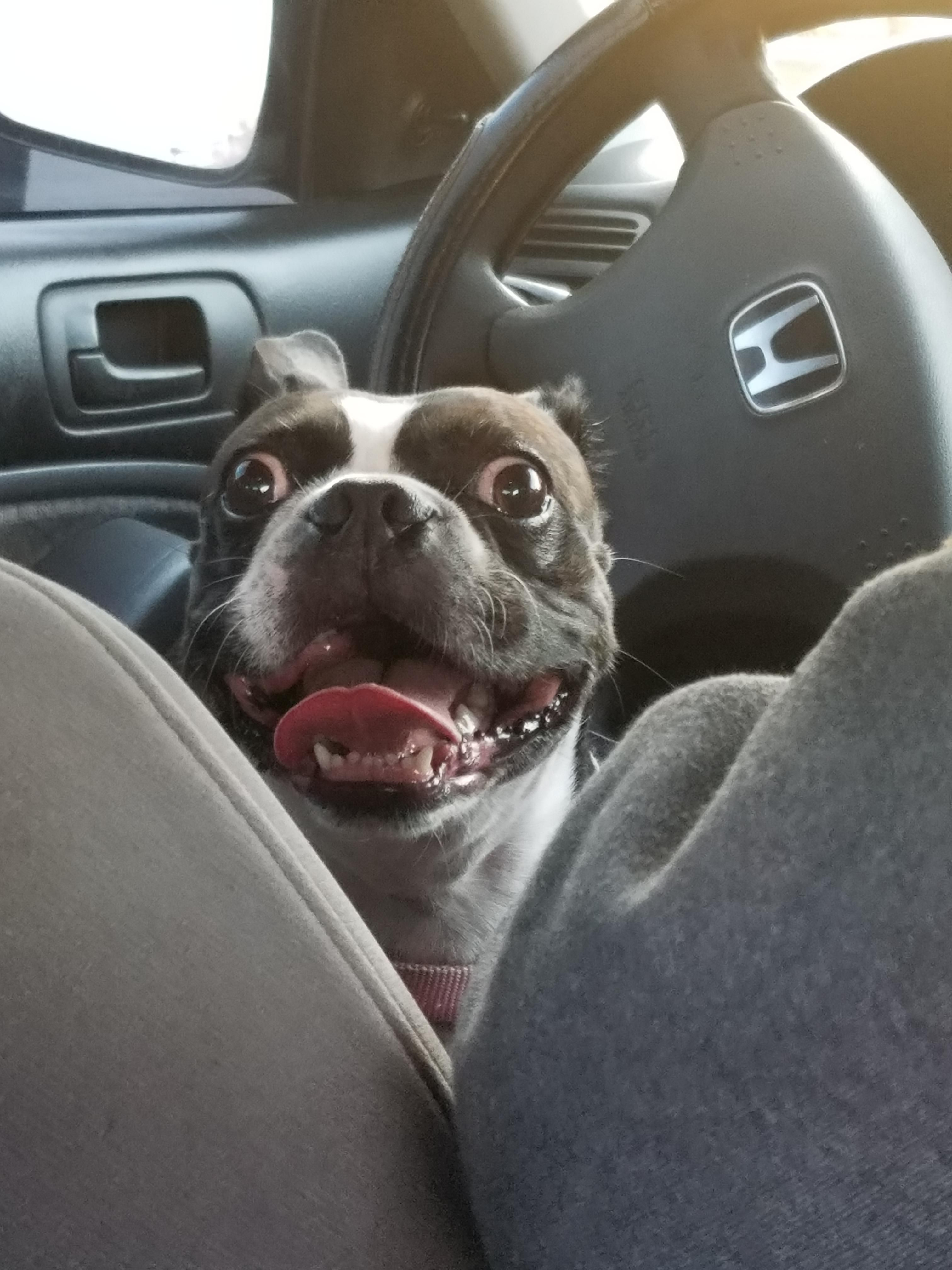 My Uber Driver Was A Cutie dogpictures dogs aww