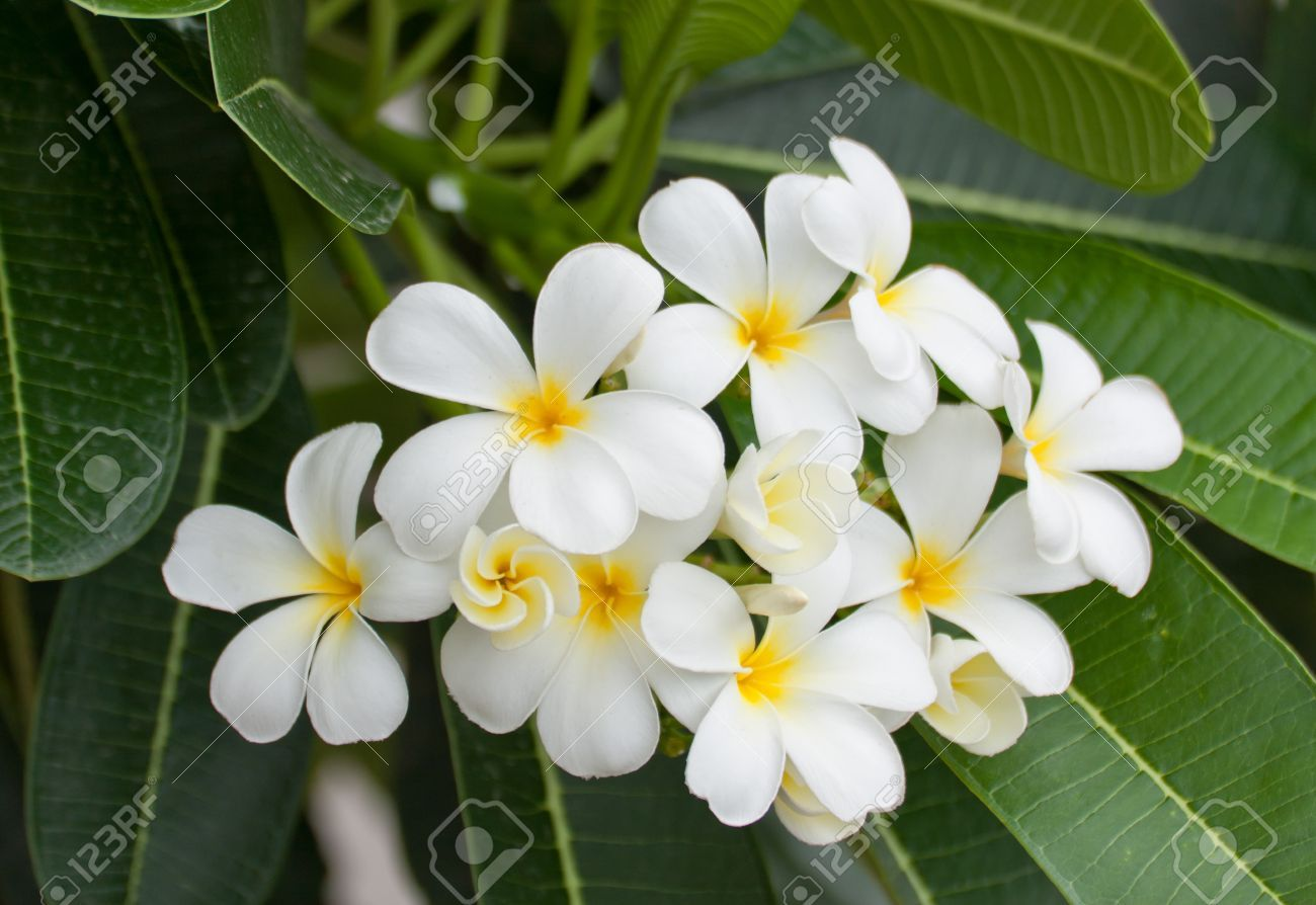 Image Result For White Tropical Flowers Tropical Paradise Project