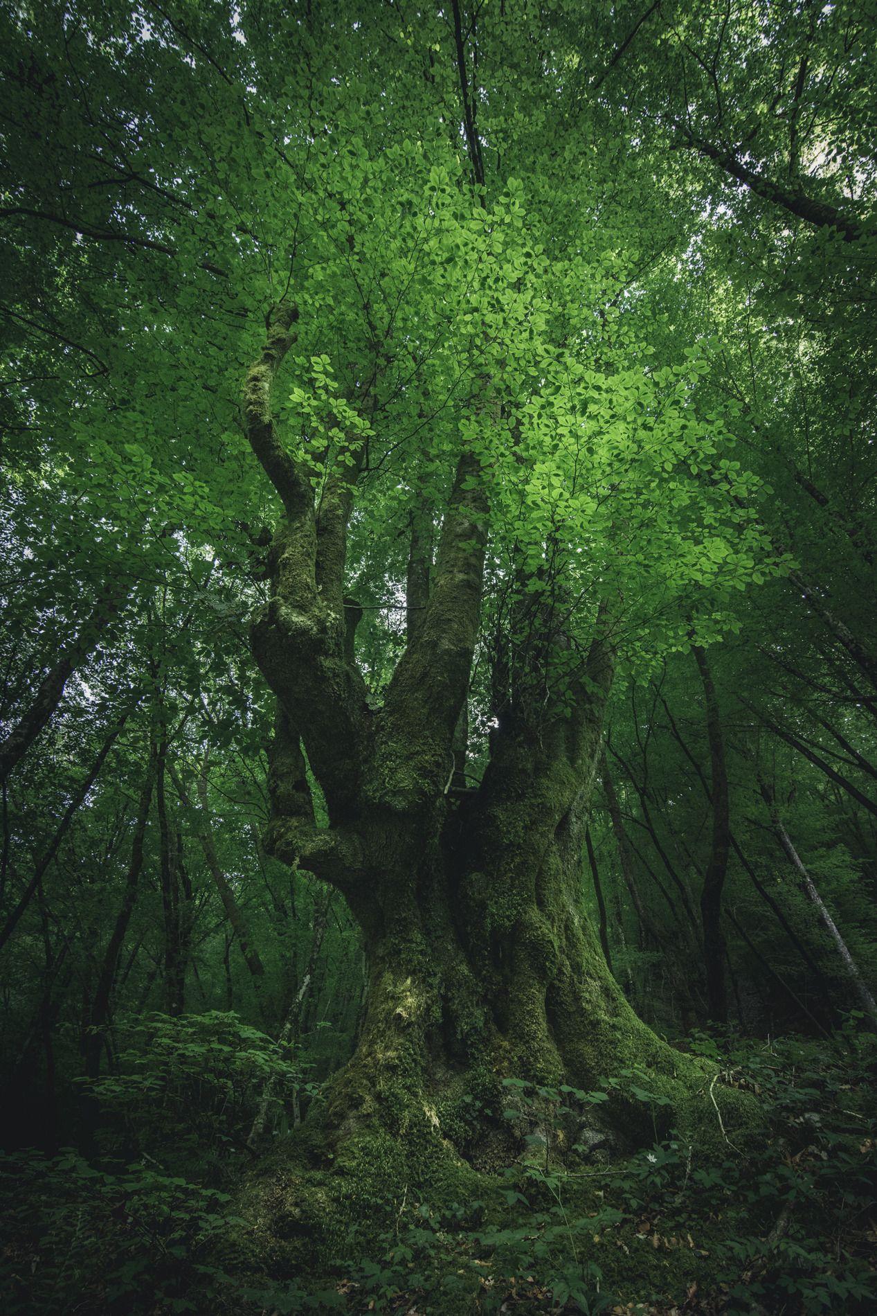 Beaten up old tree - Tolmin, Slovenia EU [OC]    | Amazingly