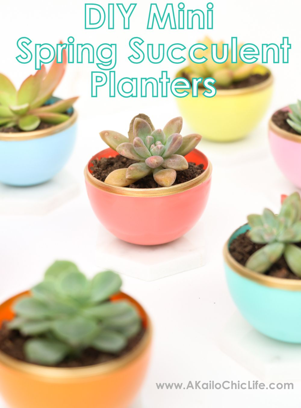 Craft It Diy Mini Spring Succulent Planters Succulent Pots Diy Succulent Planter Diy Succulents Diy