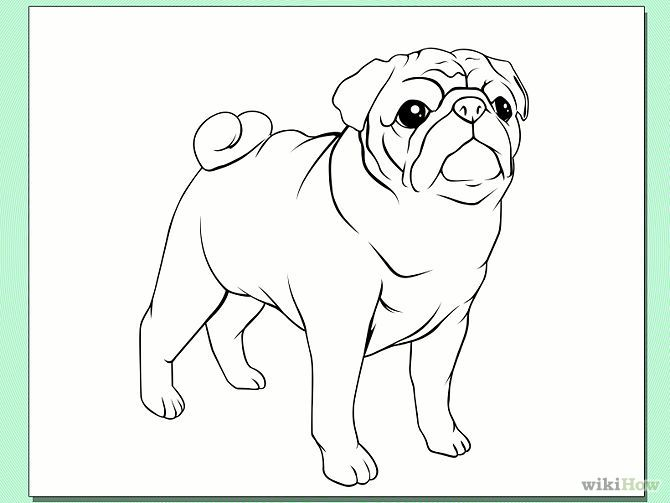 Pug Face Line Drawing : Draw a pug dog step g sy ️projekt pinterest