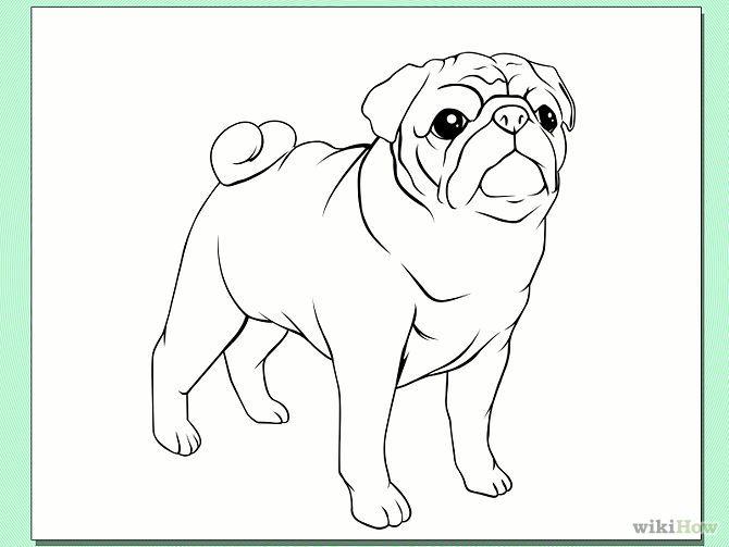 Pug Face Line Drawing : Draw a pug dog step g sy ️projekt pinterest