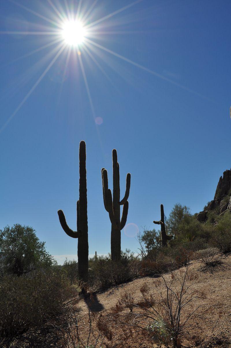 9 Ways to Meet Singles in Phoenix AZ (Dating Guide)