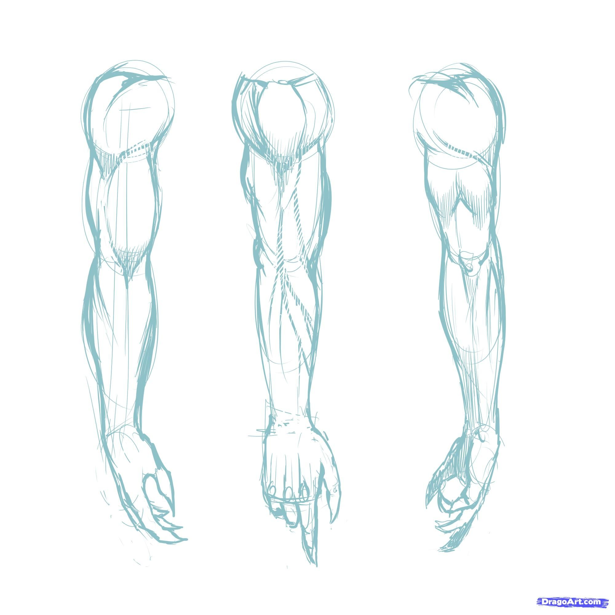 How to draw muscles step by step anatomy people free online