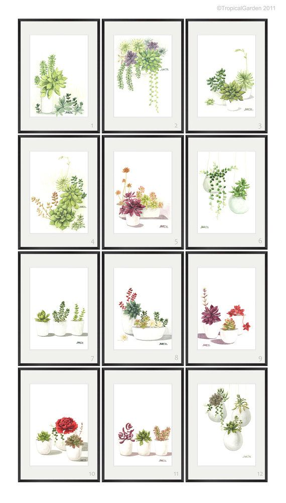 series of succulent watercolor prints.