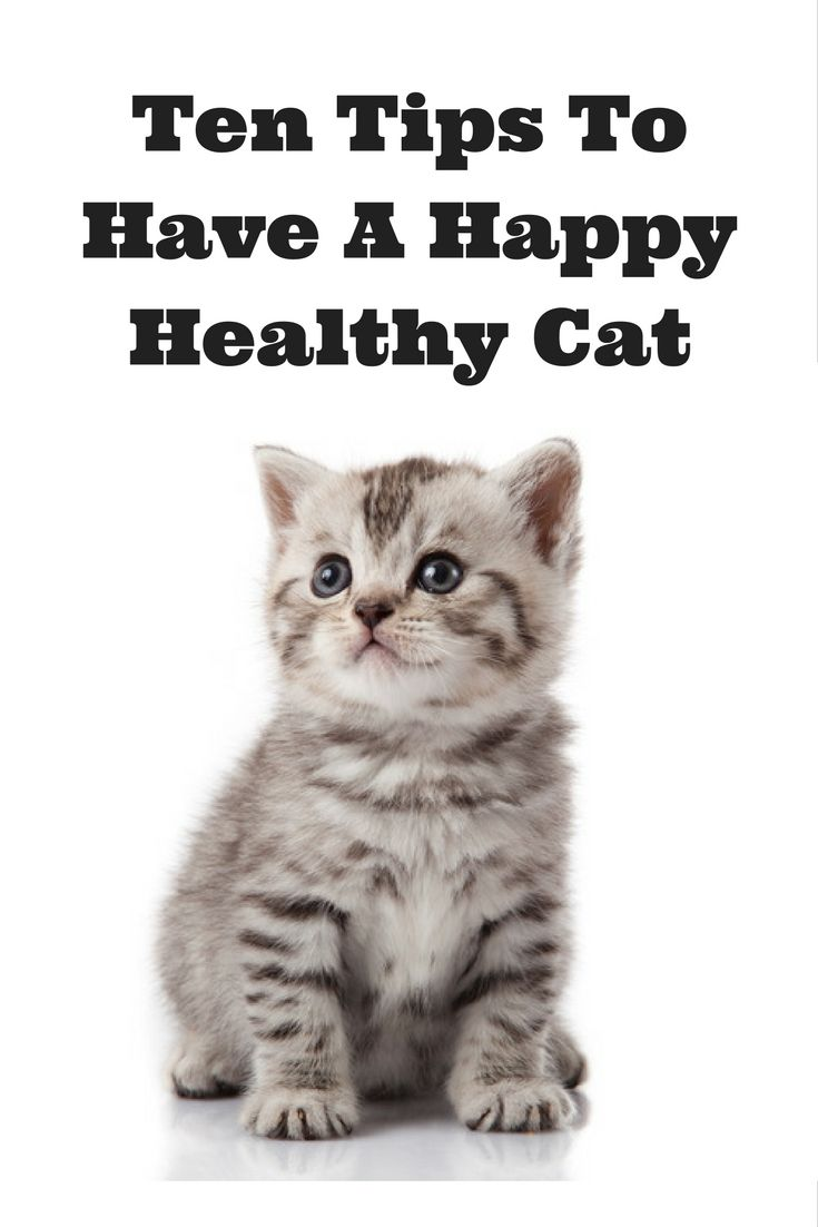 Ten Tips To Have A Happy Healthy Cat Healthy Cat Getting A Kitten Sick Kitten
