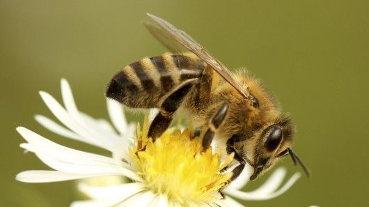 Scientists are working on creating a computer model of the honey bee's brain, which they hope to use in tiny autonomous flying robots.