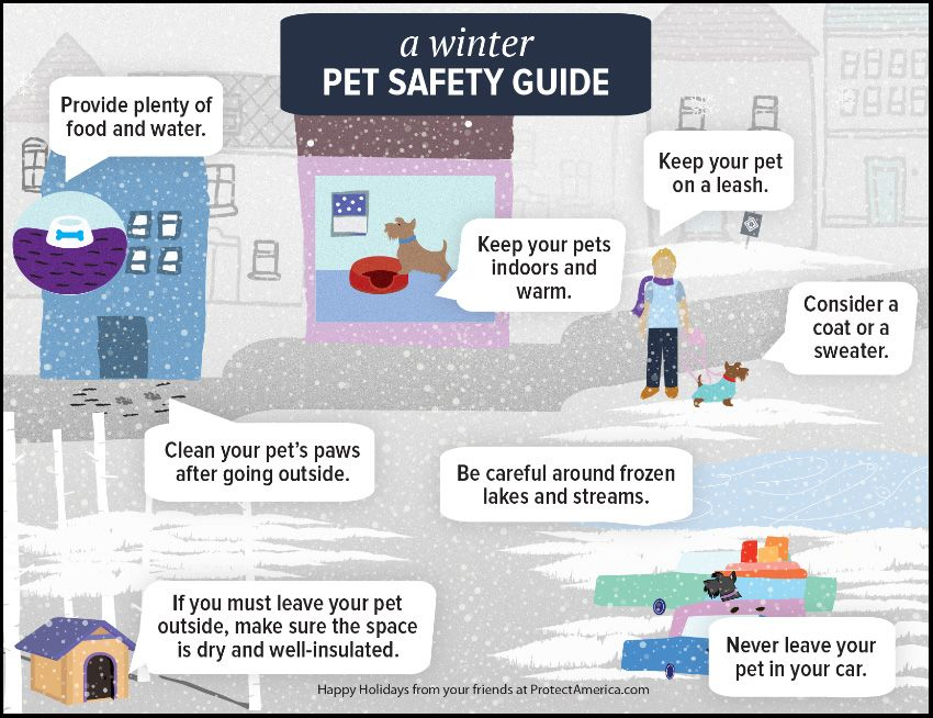 Pet winter safety guide Pet safety, Love your pet day