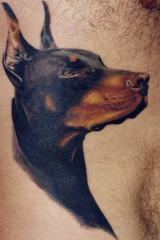 Doberman Tattoo Gorgeous Expression Doberman Tattoo