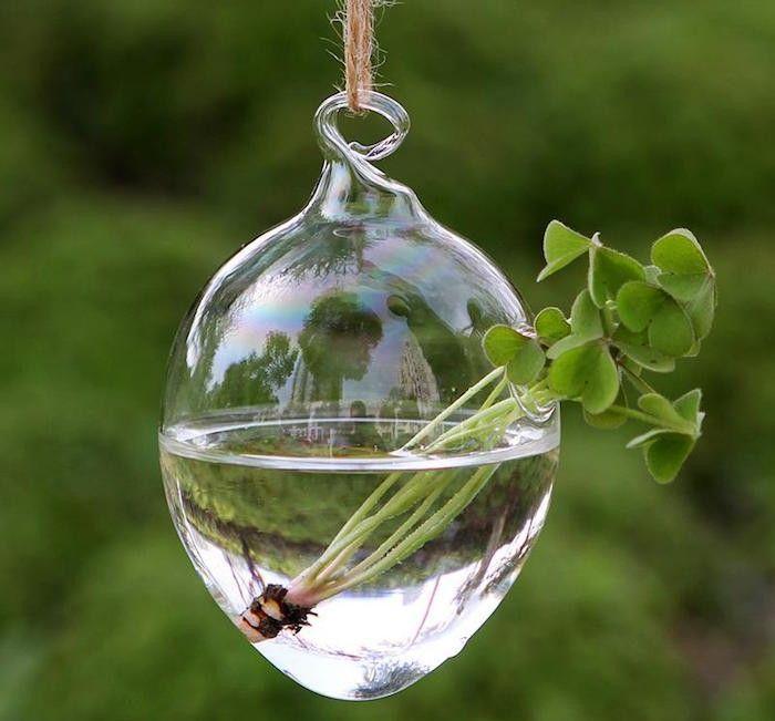 plante aquatique jetez vous l 39 eau en 47 photos plantes aquatiques cultiver. Black Bedroom Furniture Sets. Home Design Ideas