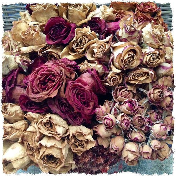 a French Country MUST have: Dried Roses (done the easy way) on alongtheleftbank.com