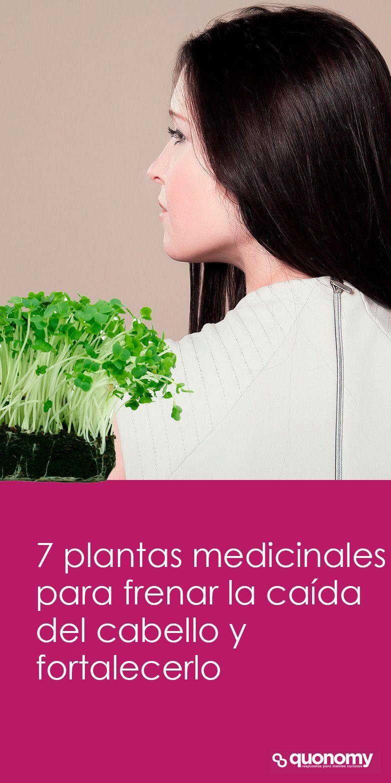 Qué Plantas Medicinales Pueden Fortalecer El Cabello Caída Del Cabello Remedios Para La Caída Del Cabello Belleza Del Cabello
