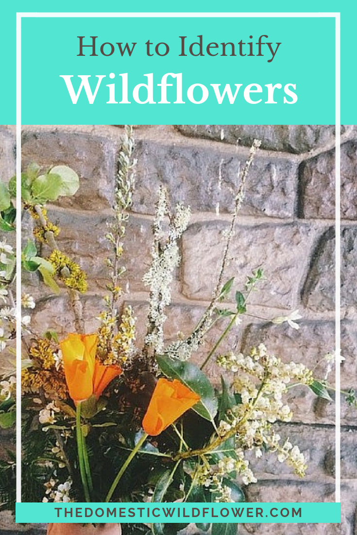 How To Identify Wildflowers In Your Area Wild Flowers Best Apps Garden